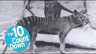 Download Top 10 Extinct Animals Video