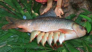 Download Unbelievable! Fishes In 25Kg Biggest Fish and then Cooking In Forest Video