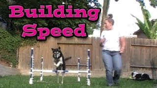 Download Building Speed: Agility Dog Training Video