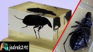 Download Beetle, Insect in Resin. DIY Video