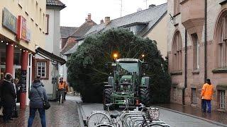 Download Sonderfahrt mit Hindernissen, Lorscher Weihnachtsbaum steht auf dem Marktplatz Video