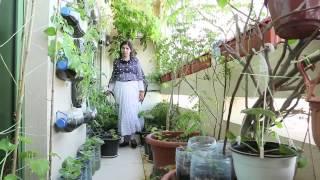 Download Dubai Municipality -Grow Your Food - Eastern Video