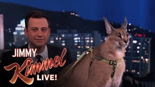 Download Dave Salmoni Scares Jimmy Kimmel with Wild Animals Video
