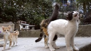 Download In Istanbul the Cats Are King Video