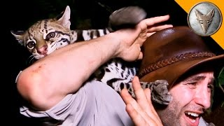 Download Ocelot ATTACK! Video