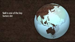 Download Soil: An essential ingredient to healthy food and nutrition Video
