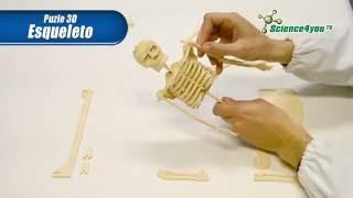 Download Puzle 3D Esqueleto | Science4you Video
