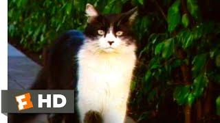 Download A Cat's Tale (2008) - Beware the Cat-Napper Scene (2/10) | Movieclips Video