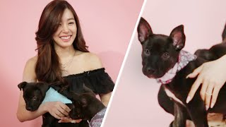 Download Tiffany Young Plays With Puppies While Answering Fan Questions Video
