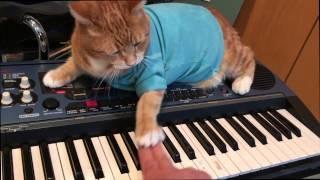 Download Keyboard Cat Teaches Keyboard! Video