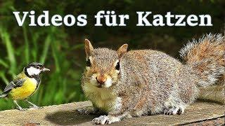 Download Videos für Katzen : Vögel und Eichhörnchen - 7 STUNDEN Video