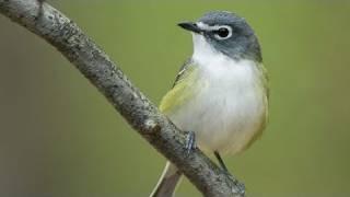 Download Inside Birding: Color Pattern Video