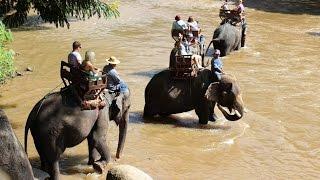 Download Tajlandia, wioska słoni Video