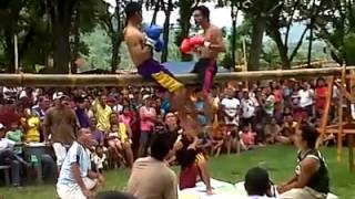 Download funny boxing in bamboo Video