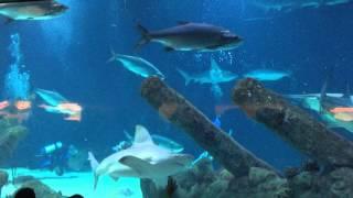 Download Feeding time at the Albuquerque aquarium Video