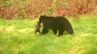 Download Cub stuck in fence rescued by mother - Maple Ridge 2010 Video