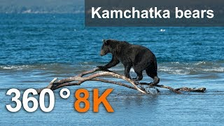 Download 360°, Journey to the bears in the Kronotsky Reserve, 8K video Video
