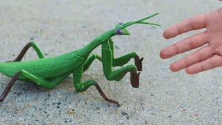 Download GIGANTIC PRAYING MANTIS! Video