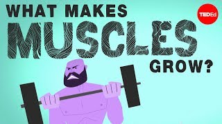 Download What makes muscles grow? - Jeffrey Siegel Video