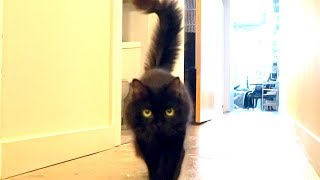 Download Human gets SLAUGHTERED by stalking cat! Video