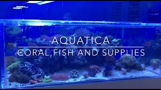 Download Aquatica - Fish, Corals & Supplies Video