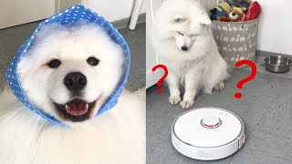 Download Dog vs. Robot Vacuum I Roborock S5 Video