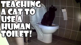 Download Teaching a cat to use a human toilet! Video