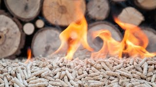 Download Breaking down biomass, part one | Sustainable Energy Video