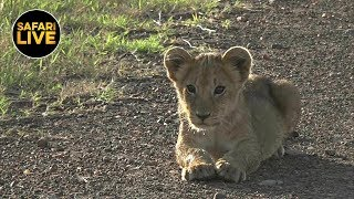 Download safariLIVE - Sunrise Safari - March 26, 2019 Video