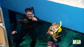 Download WWE's Chris Jericho Is Swimming With The Fishes In This Giant Aquarium | Tanked Video