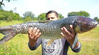 Download BUYING & COOKING BIG FISH    BEST FISH RECIPE    FISH CURRY INDIAN RECIPE    Video