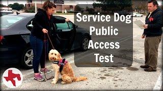 Download Service Dog Public Access Test Video