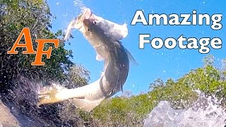 Download Cool weather Barramundi, Mangrove Jack and Dusky Flathead Andysfishing Andy's Fishing Video EP.227 Video