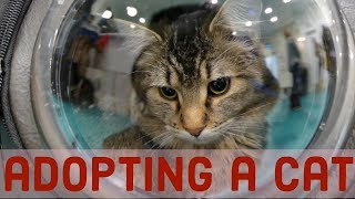Download adopting a cat from a cat cafe Video
