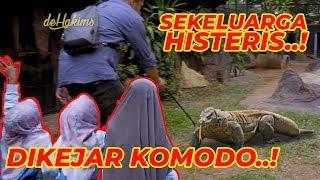 Download DIKEJAR KOMODO, DEHAKIMS PANIK..! Video