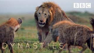Download Hyena pack attacks lion | FULL CLIP - Dynasties Video