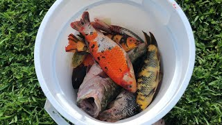 Download THEFT DESTROYED MY $25,000 Fish Collection(what Happened) Video