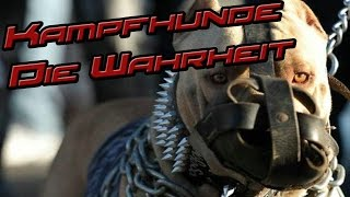 Download Kampfhunde / Gefährliche Bestien?! Die Wahrheit!! Video