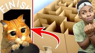 Download Giant Maze Labyrinth For Cat Kittens Can They Exit Video
