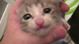 Download 【子猫】捨て猫がいたので水責めしてみた I picked up the abandoned kitty and tried wetting Video