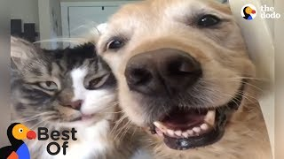 Download Animals Thankful For Being Rescued and Loved Compilation | The Dodo Best Of Video