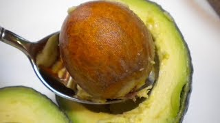 Download You'll Never Throw Away Avocado Seed After Watching This Video
