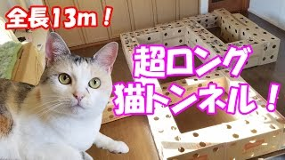 "Download 超ロングなダンボール猫トンネルに挑むネコ吉! Neko Cat tried the ""Ultra long handmade cardboard cat house"" Video"