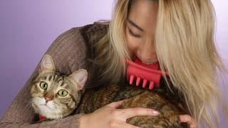 Download People Lick Their Cats With The Licki Brush Video