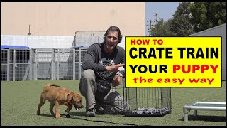 Download How to CRATE Train Your Puppy - The EASY Way to Crate Train Your Dog Video