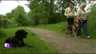 Download Laurent Amann löst die Aggression verursacht durch Gewalterziehung eines Hundetrainers Video