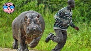 Download Top 10 MOST DANGEROUS Animals In AFRICA Video