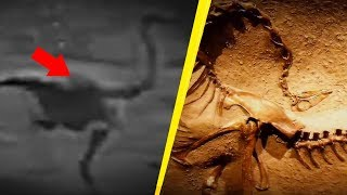 Download 5 Dinosaurs Caught On Camera & Spotted In Real Life! Video
