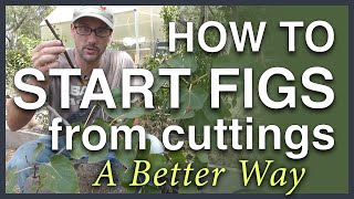 Download Propagate Figs From Cuttings: A Better Way Video