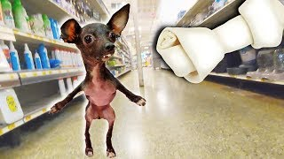 Download Buying a Special Needs Dog EVERYTHING She Touches! Video
